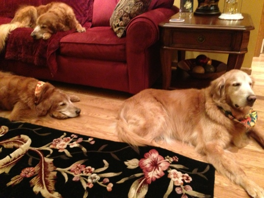 Molly (on couch), Riley (left floor), and Seamus (right floor)