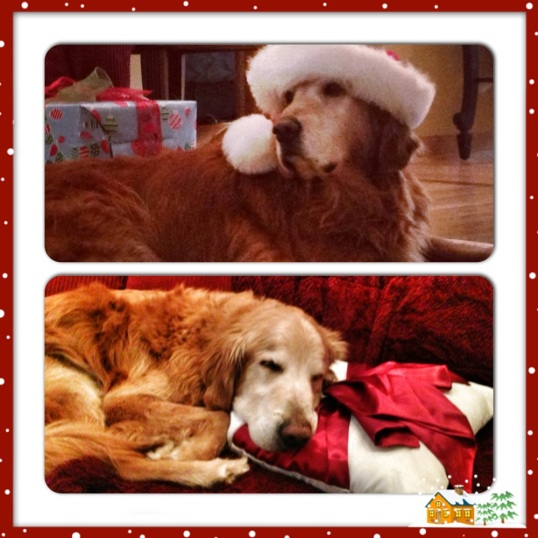 Wishing you warm and wonderful holidays from Riley (top) and Seamus (bottom).